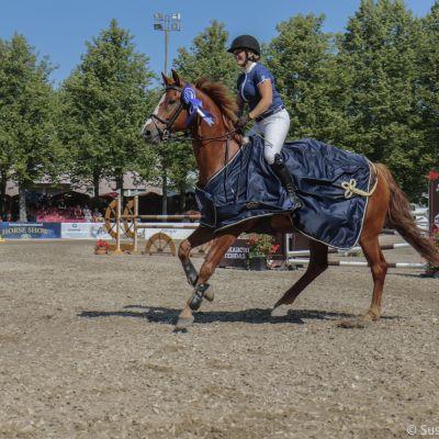En häst spatserar med stolta steg.