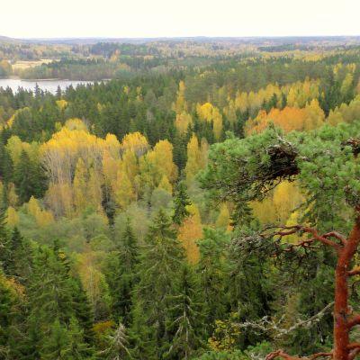Syysmaisema Aulangon näkötornista Hämeenlinnassa