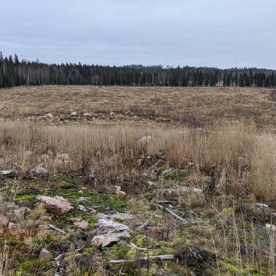 Raivattu, laakea alue metsän keskellä.
