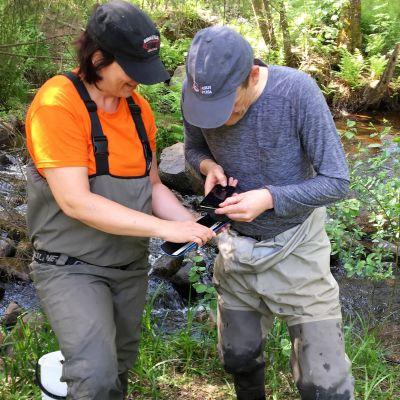 Pauliina Louhi ja Jaakko Erkinaho mittaavat koekalastuksessa Hupisaaren puroista saatuja taimenenpoikasia.