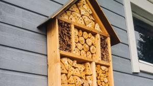 Ett insektshotell upphängt på en grå husvägg. Hotellet ser ut som en låda med korta träbitar i. Träbitarna har olika stora hål.