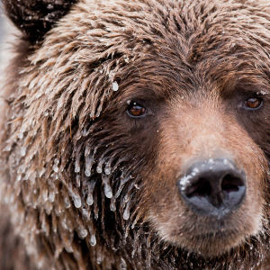 Neliosainen sarja kuvaa Kanadan villiä luontoa.