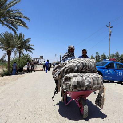 Tusentals människor har tvingats fly sina hem i den IS-kontrollerade staden Ramadi i Irak.