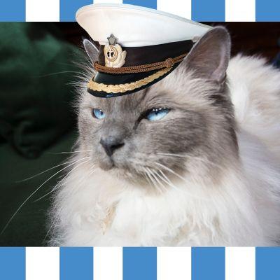 Jussi-kissa seilorin hattu päässään.