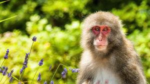Kolmiosainen dokumenttisarja esittelee Japanin huikeaa luontoa.