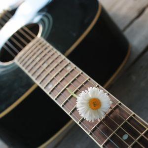 En gitarr med en blomma i strängarna ligger på en brygga.
