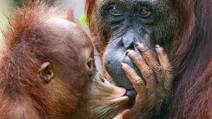 Luontodokumenttisarja tutustuu erikoisiin emoihin ja verrattomiin vanhempiin.