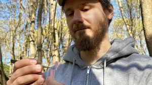 Fästingforskare Jani Sormunen sätter med pincett en fästing han hittat i skogen in i ett provrör.