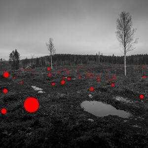 Mustavalkoisessa kuvassa metsää ja punaisia pisteitä.