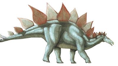 En stegosaurus.