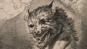 Johann Elias Ridinger: Wolfsgesichter, 1742 (Vargansikten)