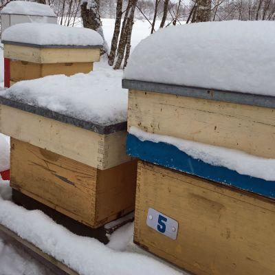 Mehiläistarha lumen keskellä