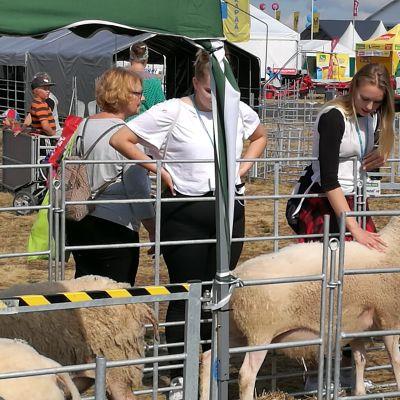Kotieläinten kallistuva rehu nousi huoleksi Oripään OKRA-näyttelyssä.