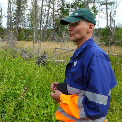Skogsexpert Kari Laiho står vid ett skogsbryn.
