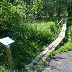 Efter Skärgårdsvägen fortsätter Westerholmstigen in i skogen.