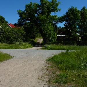 Ernholm gård är i dag nästan intäckt av träd. På Victor Westerholms tid var träden betydligt färre.