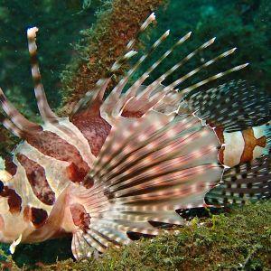 Lembehin salmi Indonesiassa on maailman merien monimuotoisimpia paikkoja.