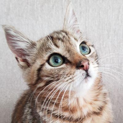 En kattunge.
