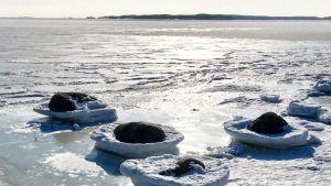 Snötäckta stora strandstenar i solsken. Istäckt hav så långt ögat kan nå.