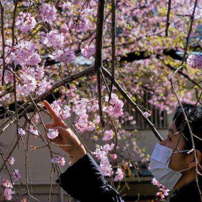 mies tutkailee kukkia maskissaan