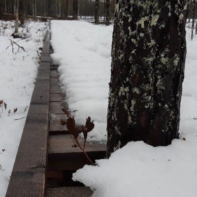 Lähikuva esteettömän polun reunasta, jossa on pieni korotus.
