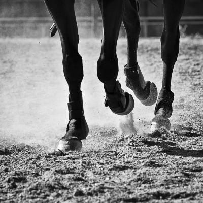 Hästhovar.