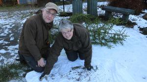 Heikki ja Leena Luoto tutkivat joulukuusesta tulleita ötököitä.