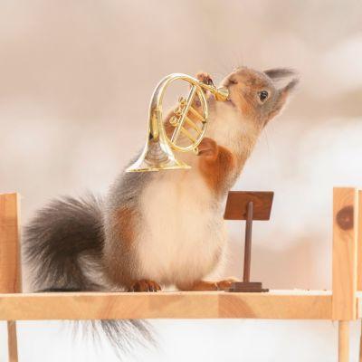 Orava yrittää soittaa pientä torvea
