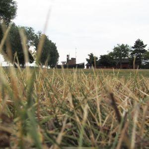 Torr gräsmatta i park.