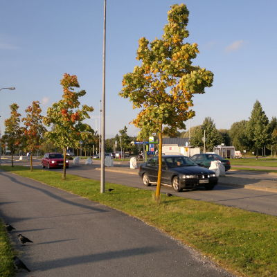 Två bilar åker längs Strandvägen en solig höstdag då träden börjar bli gulare och rödare.