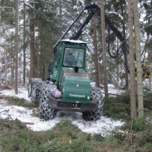 Skogsavverkning i Ingå.