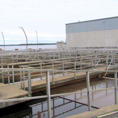 Påttska reningsverkets bassänger