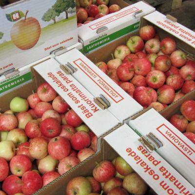 Äppellådor från Vols gård i Virkby.