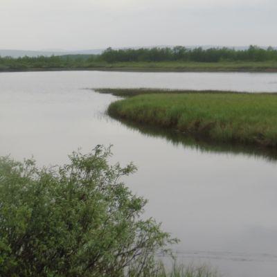 Suvantokohta joessa, rannoilla saraikkoa ja pajukkoa