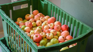 Äpplen i en låda