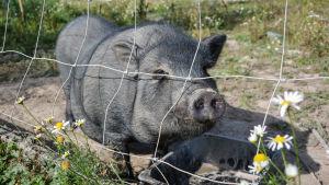 En gris bakom ett nät