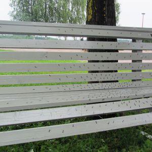 Hanna Olás parkbänk i Strandparken i Lovisa pryds av myror