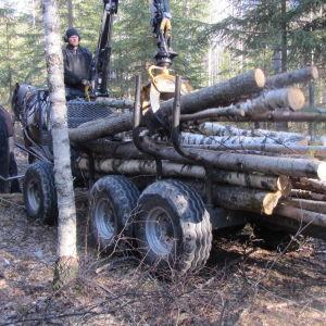 Miika Åfelt on kehitellyt hevosvaunun, josta on hyötyä metsätöissä