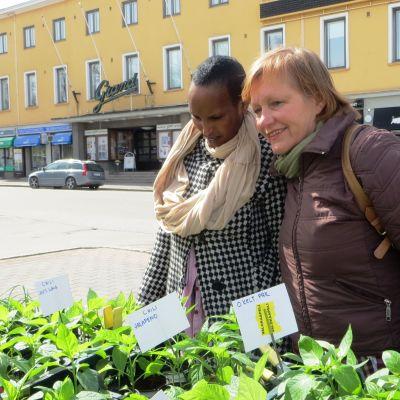 Sabrina Kuusiniemi och Marianne Green beundrar örtplantor på Borgå torg inför Möjligheternas torg på Kulturhuset Grand
