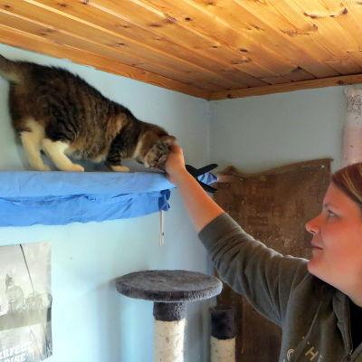 katt med skötare