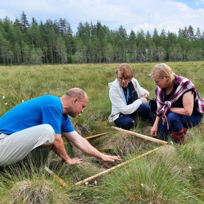Kolme ihmistä tutkii kasveja suolla