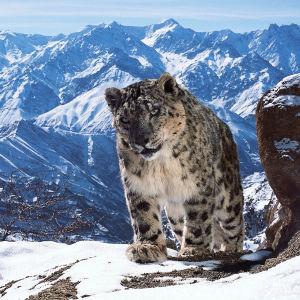 Planeettamme Maa II tarjoaa odotetun jatkon vuonna 2007 nähdylle Avaran luonnon huippusarjalle.