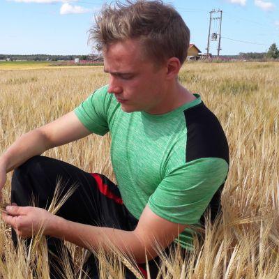 Antti Pukara pohdiskelee viljapellollaan.