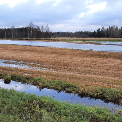 Tulvavettä pellolla.