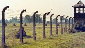 Keskitysleirin jäänteitä 1950-luvulla. Kuva dokumenttielokuvasta Yö ja usva.
