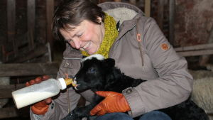 Anna Grönblom matar ett får