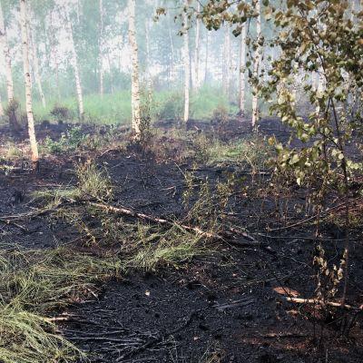 Metsäpalon polttamaa maisemaa Muhoksen Tikkalanperällä 2020.