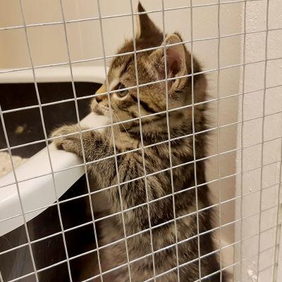 kissanpentu löytöeläintalossa