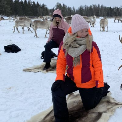 Porojoogaa Kuusamossa Kujalan porotilalla.