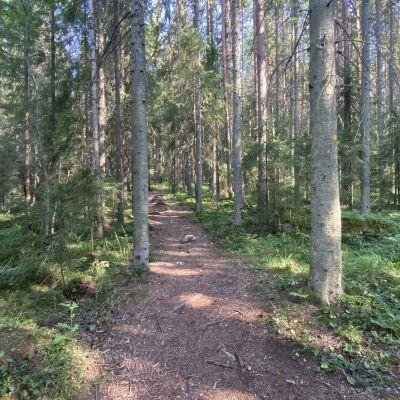 kuvassa metsää, jossa kulkee keskellä maastopyöräreitti.